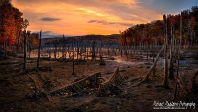 Sea of Dead Trees