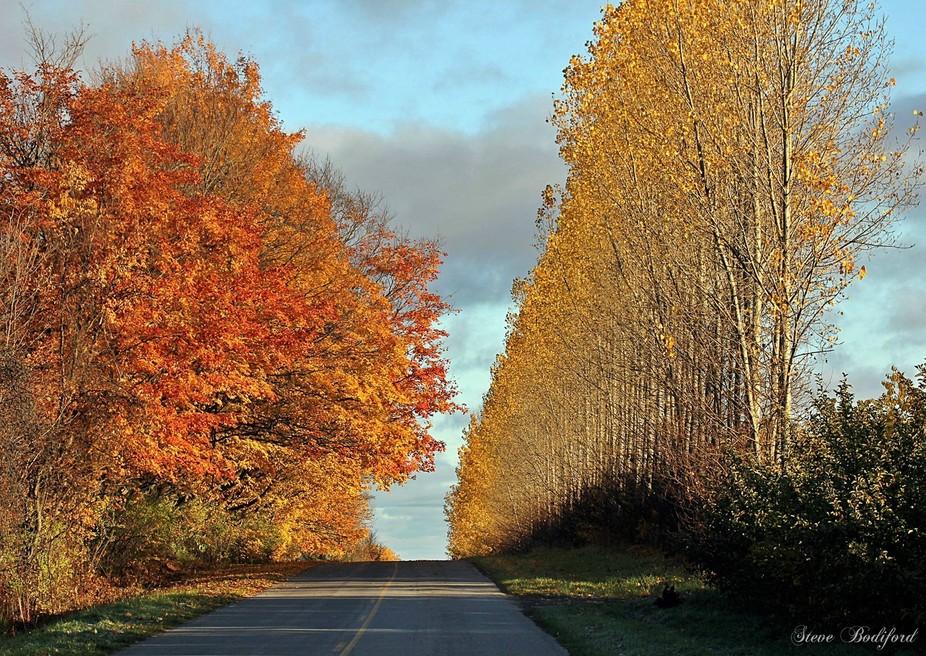 Highway to Oz