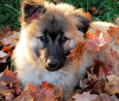 Arti Loves Leaves