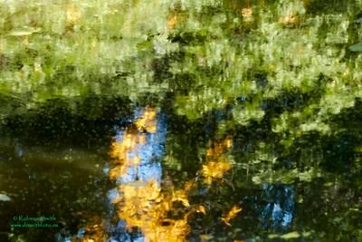 Reflections Wychwood Pond - Photo by Robson Smith