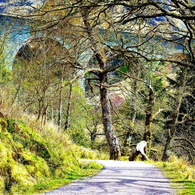 Spring time Glenfinnan in Inverness -shire beautiful woodland surrounding  the viaduct .