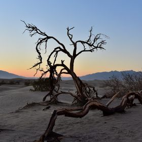 Taking at around 7pm around Death Valley National Park near death valley sand dunes, dried tree as the primary subject for the sunset. No preset