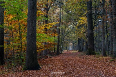 Fall Path In The Forest