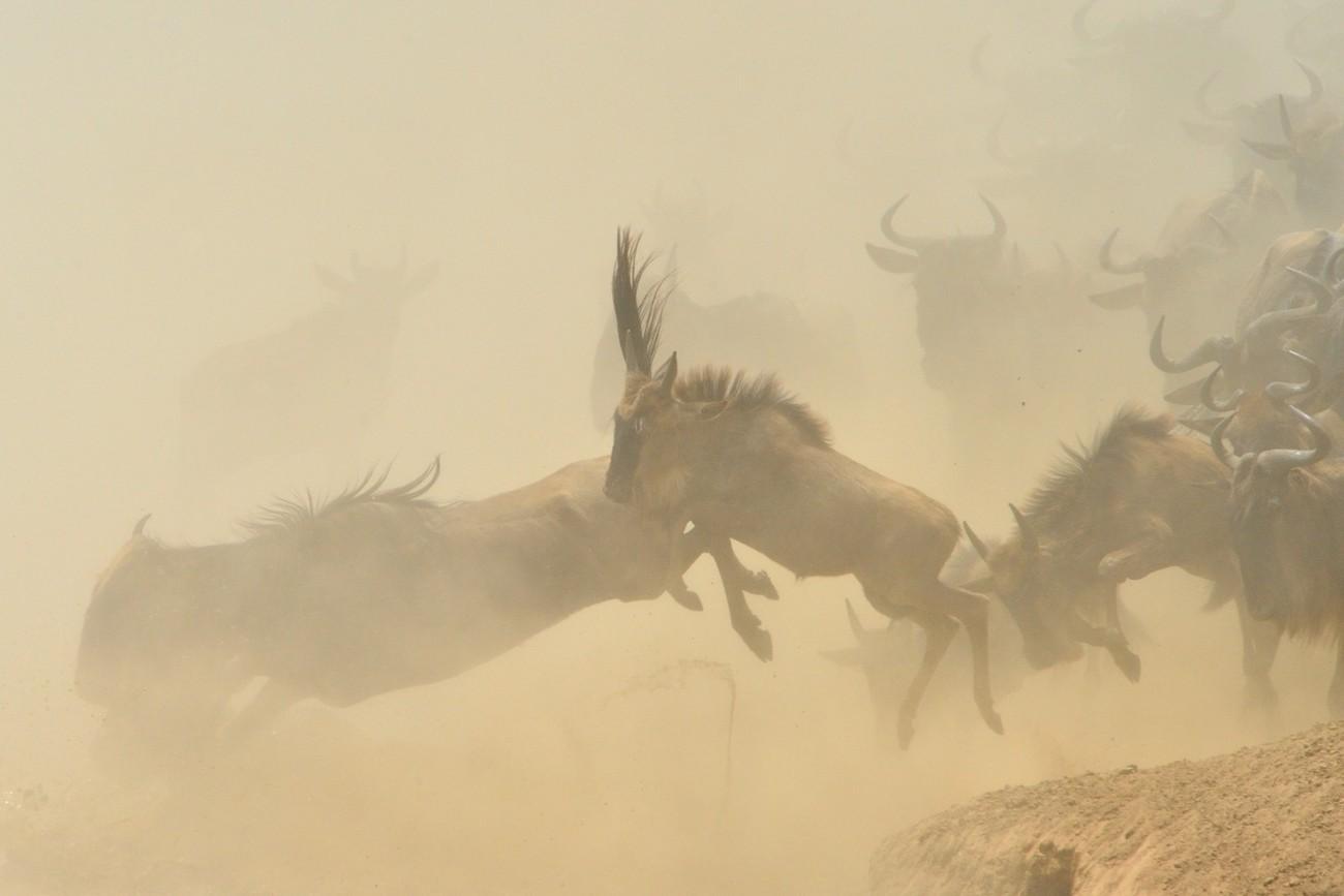 Dusty Photo Contest Winners