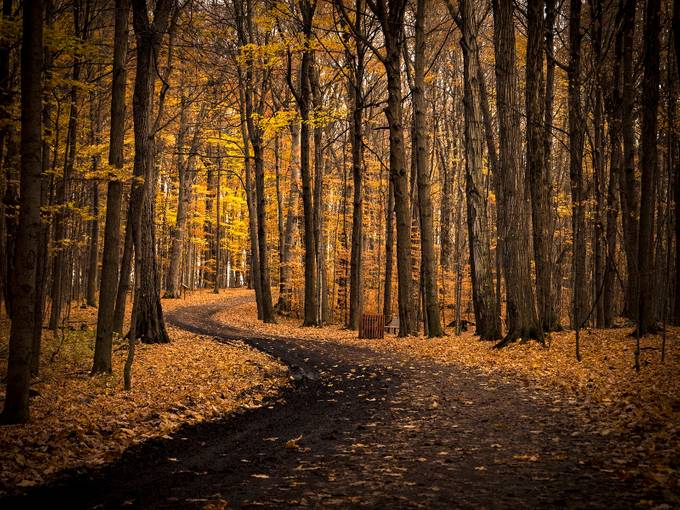 Autumn Path by lindagagnon - Tall Trees Photo Contest