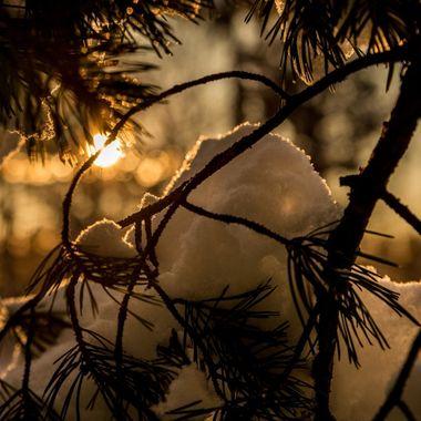 Late Winter