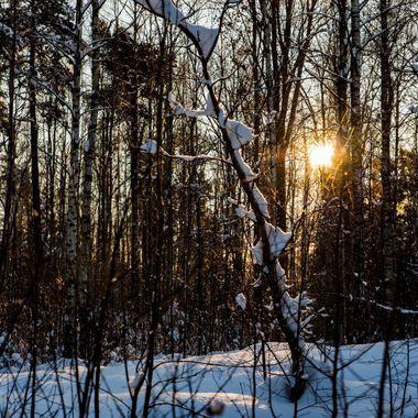 Hidden Winter