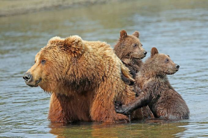 Mom and the kids by jozi1 - Animals And Water Photo Contest
