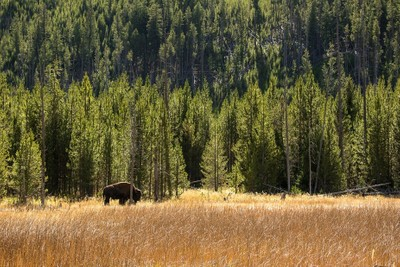 A Yellowstone afternoon