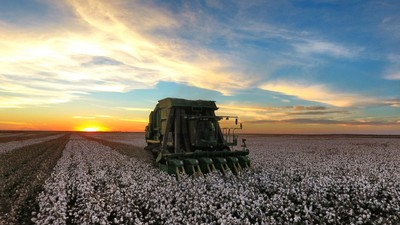 Cotton picker sunset