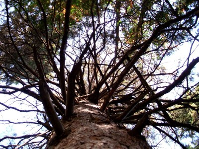 Branches of Life