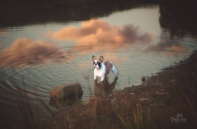 Rambo In the Sky by jesdomacasse - Animals And Water Photo Contest
