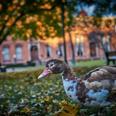 Is this a duck? #dreamingawake_photography #parkingmymindinthepark