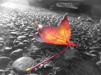 Sun_Shining_Through_A_Leaf