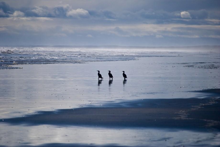 On Foxton beach, New Zealand