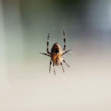 Spider at Home