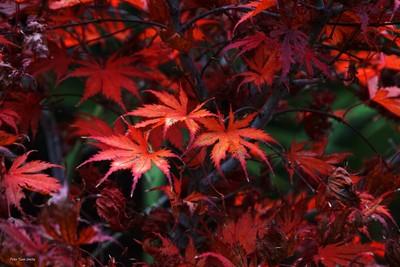 Fall colours DSC08564