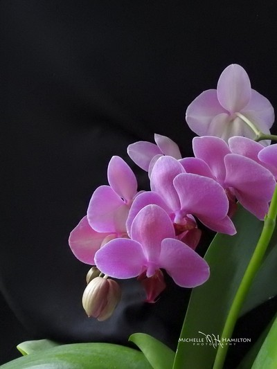 Orchid Love (3)