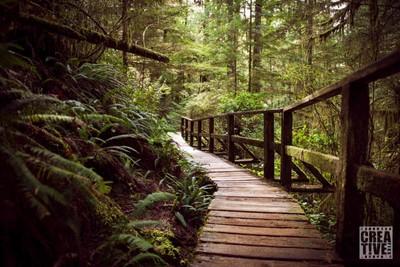 CF_Rainforest Loop Trail_Feb24_wm