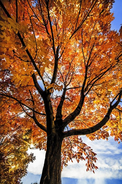 IMG_9081-Autumn Color 1 - 2016
