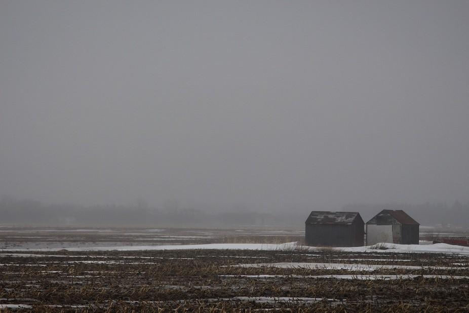 A foggy morning on the Prairies