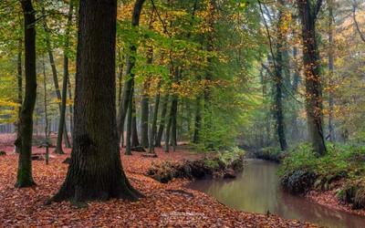 Fall At The Brook