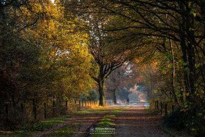 Autumn Nordic Walking