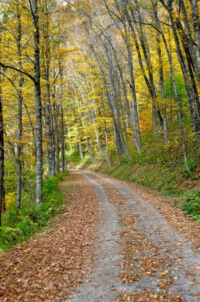 Balsam Mountain Road