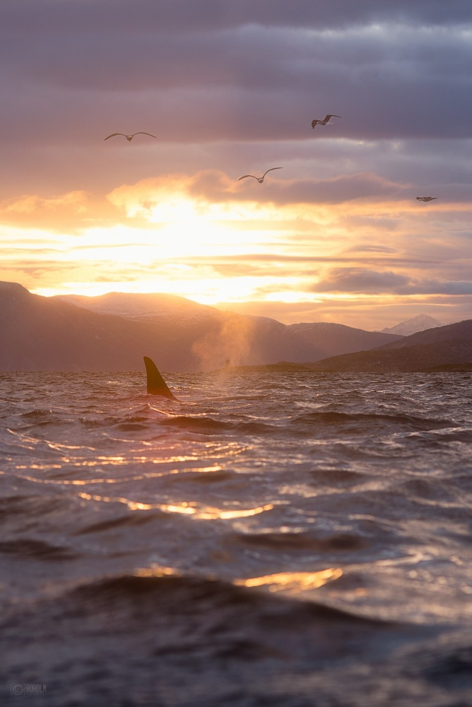Orca by Boholm - The Ocean Photo Contest
