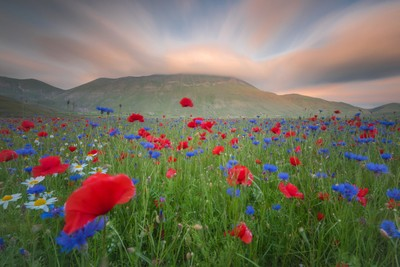 Sunset between the poppy fields of Castelluccio di Norcia.