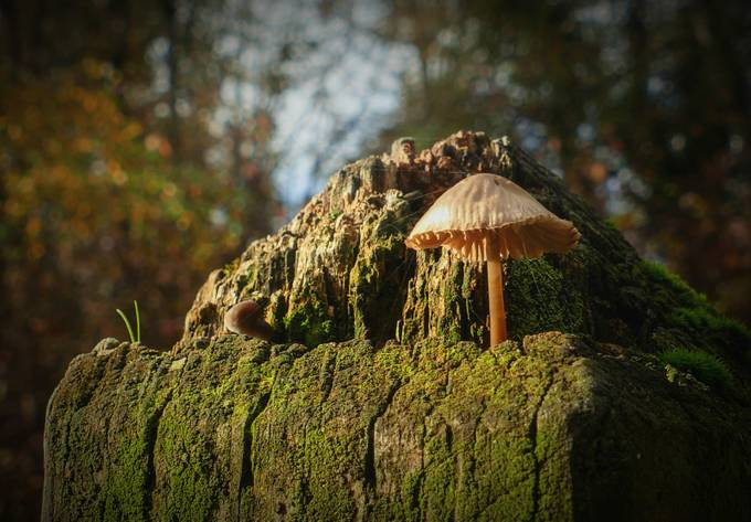 Isolated by scenerychronicle - Mushrooms Photo Contest