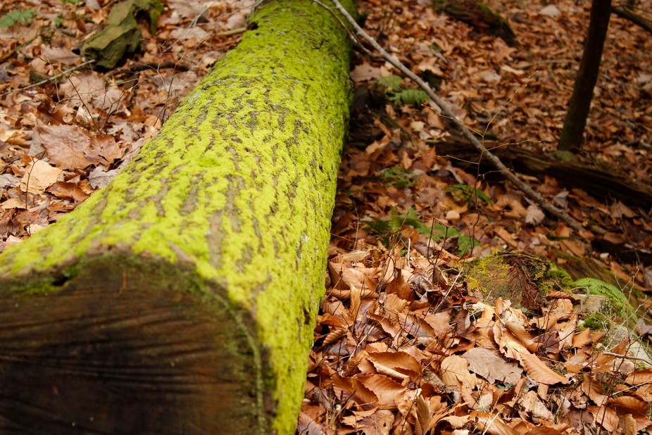 Spent some time with my dad in Hocking Hills hiking and taking pictures.  Loved the green of the ...