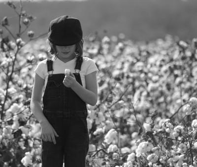 Cotton Season