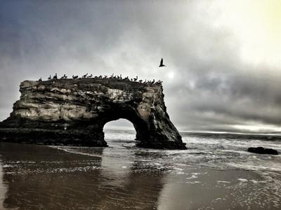 Seabirds at Natural Bridges State Beach