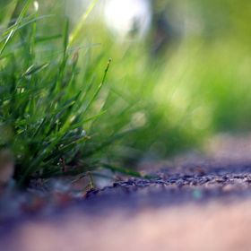 Was in the park on the ground and while using my 18-55 lens I wanted to focus on the grass..