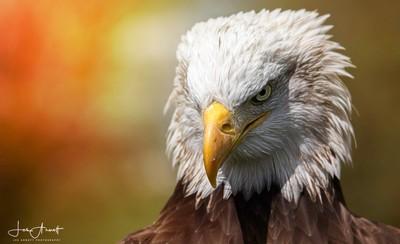 Eagle AtiTuDe!