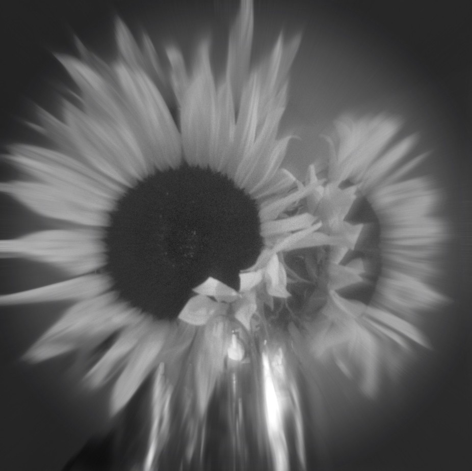Sunflowers blurred black&white App used from Ȯggl pinhole