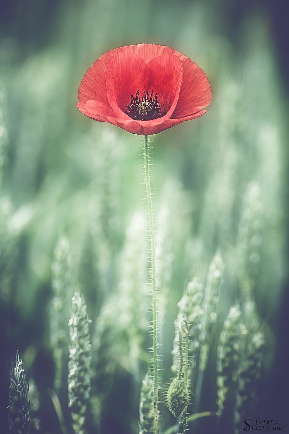 Remember.... by ShadowShots - Isolated Photo Contest