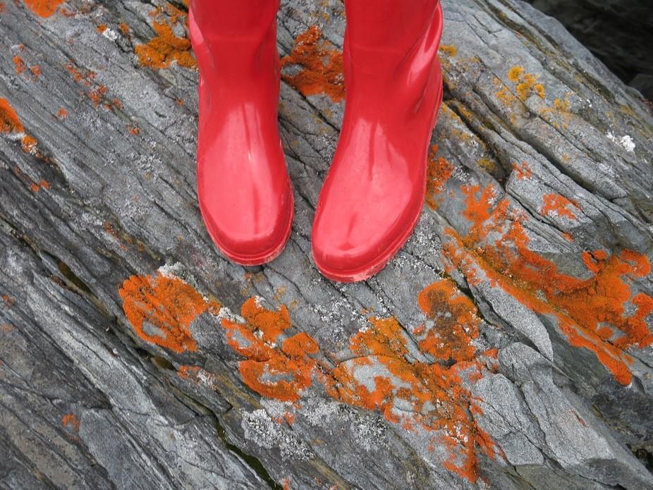 Taken on a beautiful island in White Bay Newfoundland.