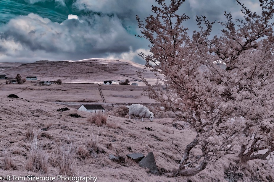 Near the SE tip of the Isle of Skye, Scotland, this beautiful landscape seemed to WANT to show off in IR! Taken with a LIfePixel converted Nikon D300.