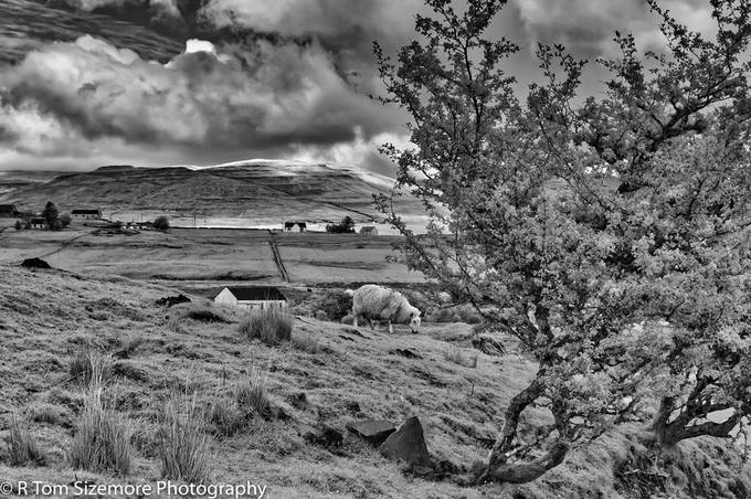 Taken on the Isle of Skye, Scotland, with a LifePixel IR converted Nikon D300.   The scene, near the SE portion of the Isle of Skye, simply cried out for an IR rendering!