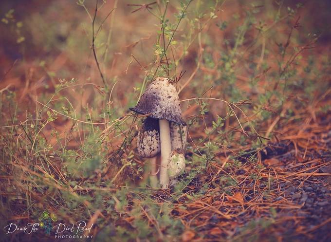 Hidden and Beautiful by dtdrphotography - Mushrooms Photo Contest