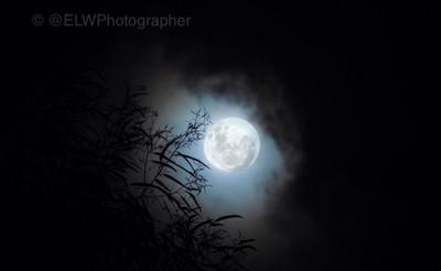 Super Moon - November 2016
