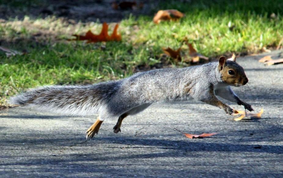 saw me sneaking up--see ya