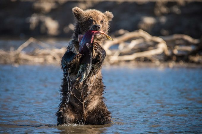 First catch by antonagarkov - Animals And Water Photo Contest