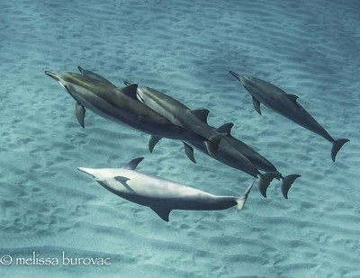 One Crazy Dolphin