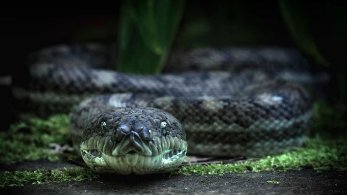 Last requests by Bullet_Photography - Snakes Photo Contest