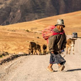 High up on over 4,000 m in the Anden he guarded his cattle and donkey herd. The little shepherd alone on the dusty road to Cusco. Seen with a sho...