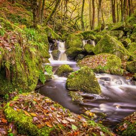 This brook or stream winds and tumbles its way through a deep thickly wooded gorge in the English Peak District.  Rain had saturated the mossy ro...