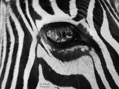 A Black & White Life